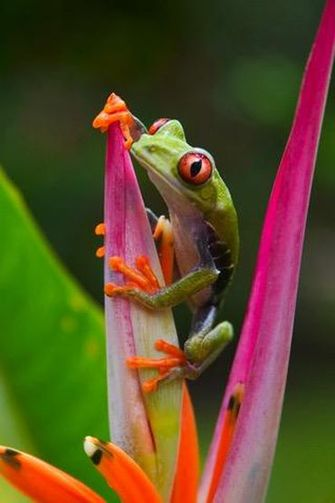 frog-wallpaper-ios